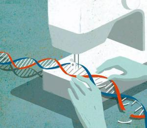The birth of a genome edited baby